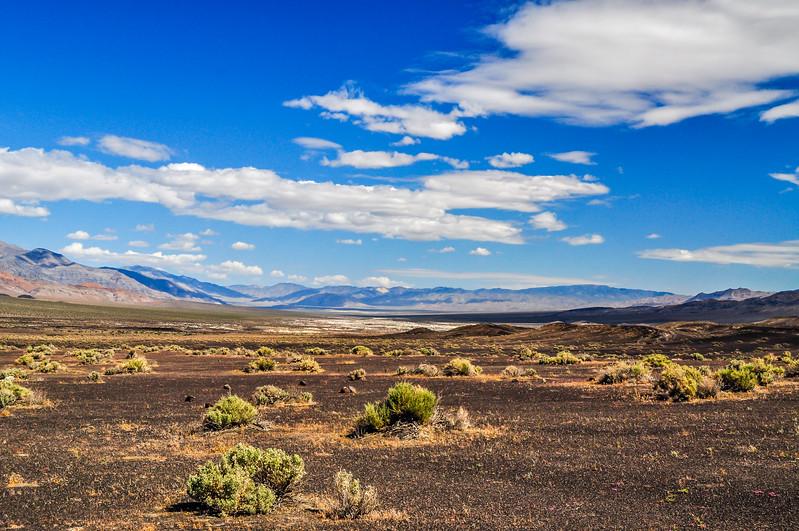 Desert Contrasts