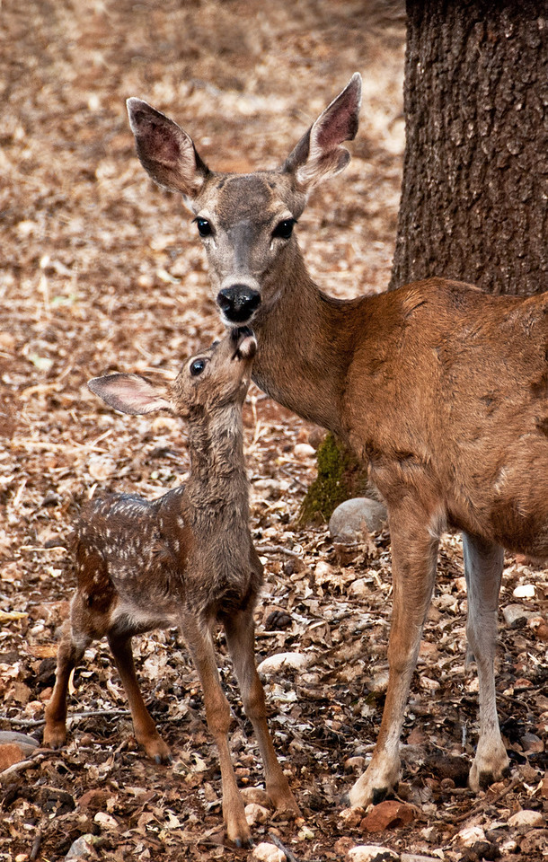 Bambi Love