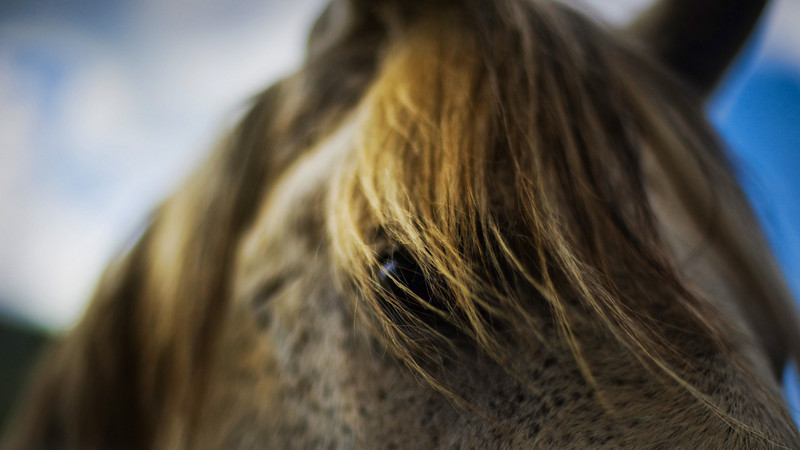 """<h2>Horses at f/1.4</h2> <br/>Everything looks better at f/1.4!  Kids, flowers, horses, and anything else with nice details really look amazing at f/1.4.  In fact, this is a tiny little secret in the photography world.  Even a rookie can make something look pretty special when using this lens!  Sure, it doesn't always work out, and you still need good composition, but some extremely unique photos pop out from time to time.<br/><br/> - Trey Ratcliff <br/><br/>Read the <a href=""""http://www.stuckincustoms.com/2010/11/09/horses-at-f1-4/"""">here</a> at Trey Ratcliff's Stuck in Customs travel photography blog."""