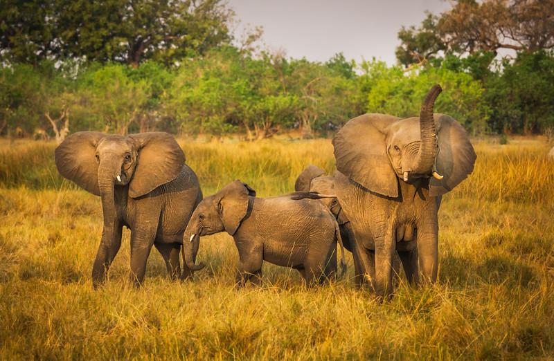 Happy Elephant Family