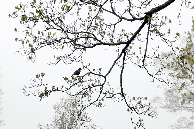 Bird in a Tree