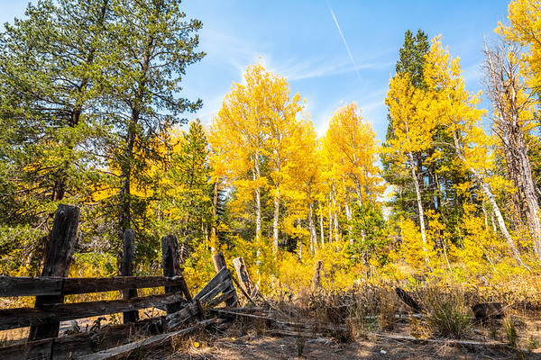 Autumn scenery with trees changing colors, blue sky, and an old fence.