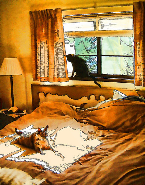 Cats, Bed & Sunlight