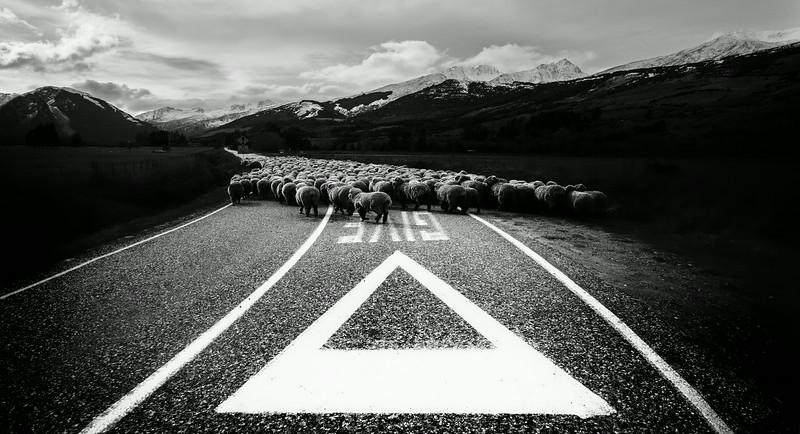 Give Sheep a Chance