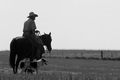 Palouse Cowboy