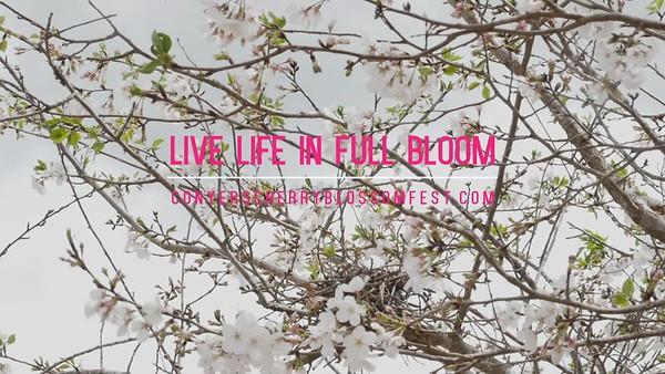 Cherry Blossom TV EDIT