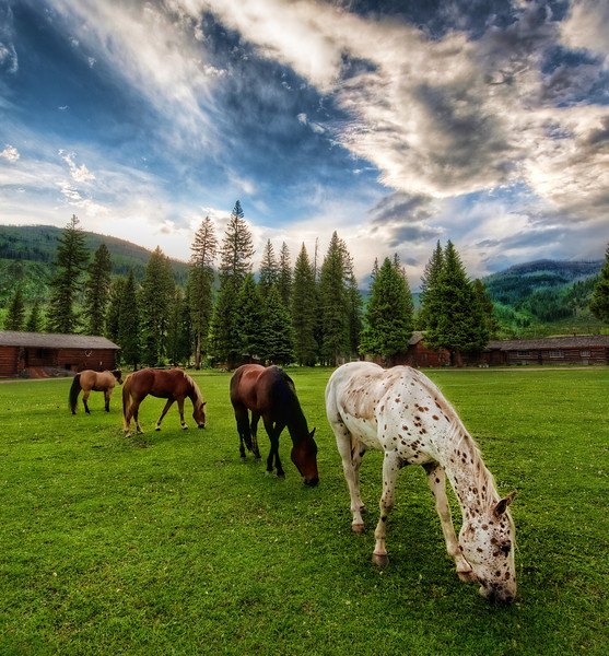 """<h2>Horses on an Evening Meadow</h2> <br/>Every night before sunset, the horses would be let out of the corral for a bit of """"personal"""" time.  They spent almost no time at all on the Internet, and, instead, just meandered around this grassy meadow at the ranch. <br/><br/>The grass looks nice eh?  And there was no lawn-mowing necessary. <br/><br/>- Trey Ratcliff <br/><br/>Read the rest, including a discussion on some Topaz issues, <a href=""""http://www.stuckincustoms.com/2010/07/27/topaz-cs5/"""">here.</a>"""