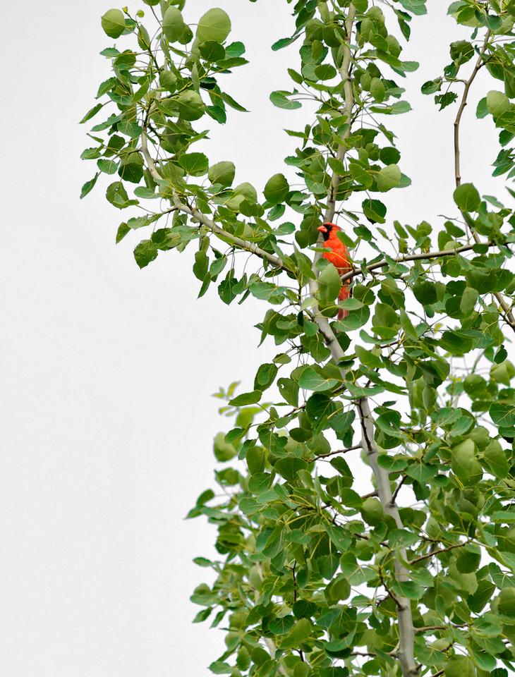 Cardinal's Lookout