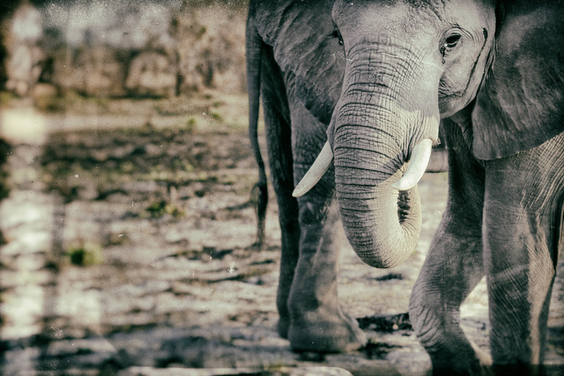Getting Up Close and Personal with the Elephants