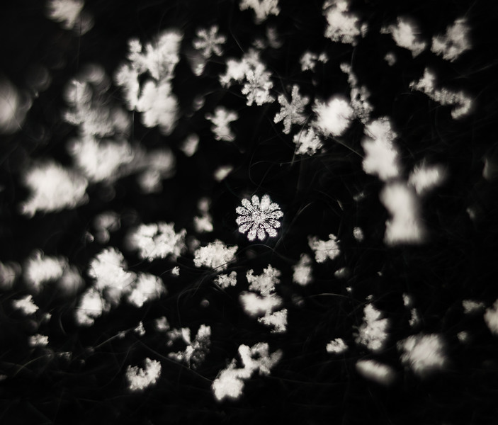 Snowflakes Up Close