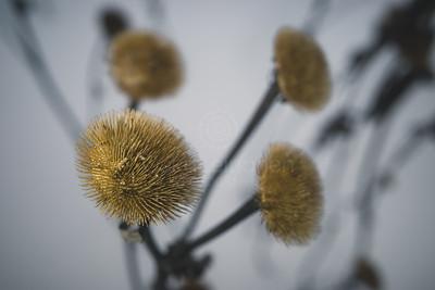 Winter Still Life IX (Flower)