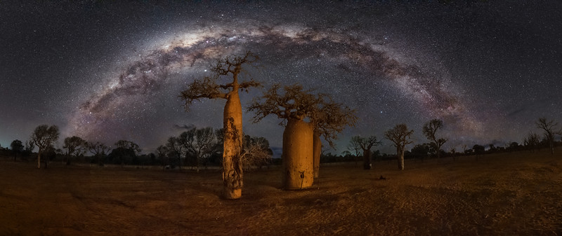 Three Baobabs Panorama