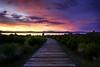 Road To Mono Lake