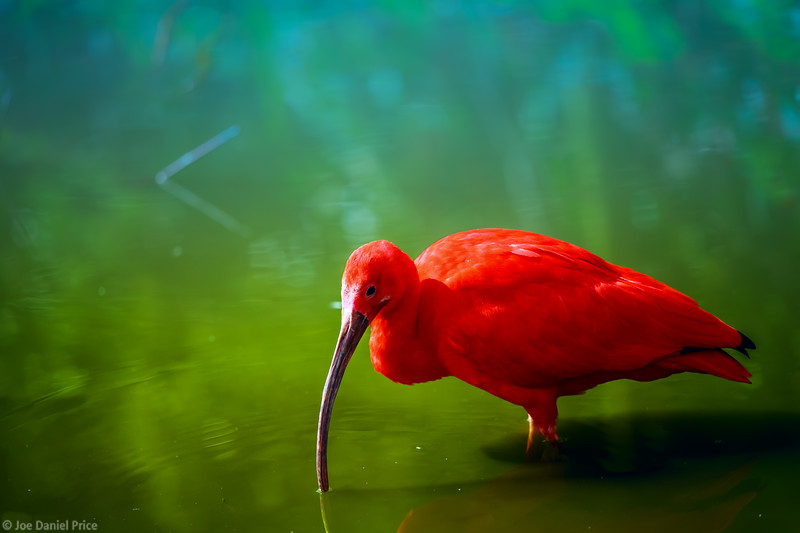 Red Ibis, Amsterdam, Holland