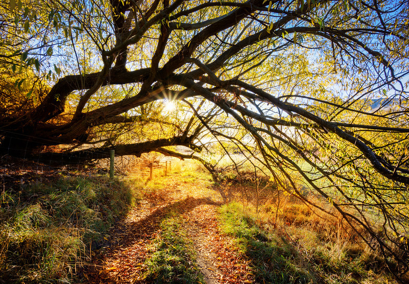 "<h2>Golden Tree Path</h2> <br/>When I took this photo, I was very happy! <br/><br/>In many ways, it's the kind of place you can easily walk through and not notice because it was on the way to somewhere else. I was trying to walk down to Lake Hayes via a new route form my house, and I saw this on the way. I feel like I'm always alert, but then sometimes I'm looking at a scene like this and I think, ""Hey, I should take a photo!"" Anyway, I need to get better at this sort of thing… and take more photos on the way to the place rather than the place itself. <br/><br/>- Trey Ratcliff<br/><br/><a href=""http://www.stuckincustoms.com/2013/07/11/golden-tree-path/"" rel=""nofollow"">Click here to read the rest of this post at the Stuck in Customs blog.</a>"