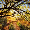"""<h2>Golden Tree Path</h2> <br/>When I took this photo, I was very happy! <br/><br/>In many ways, it's the kind of place you can easily walk through and not notice because it was on the way to somewhere else. I was trying to walk down to Lake Hayes via a new route form my house, and I saw this on the way. I feel like I'm always alert, but then sometimes I'm looking at a scene like this and I think, """"Hey, I should take a photo!"""" Anyway, I need to get better at this sort of thing… and take more photos on the way to the place rather than the place itself. <br/><br/>- Trey Ratcliff<br/><br/><a href=""""http://www.stuckincustoms.com/2013/07/11/golden-tree-path/"""" rel=""""nofollow"""">Click here to read the rest of this post at the Stuck in Customs blog.</a>"""