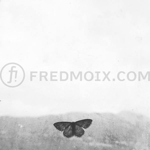 Butterfly and horizon