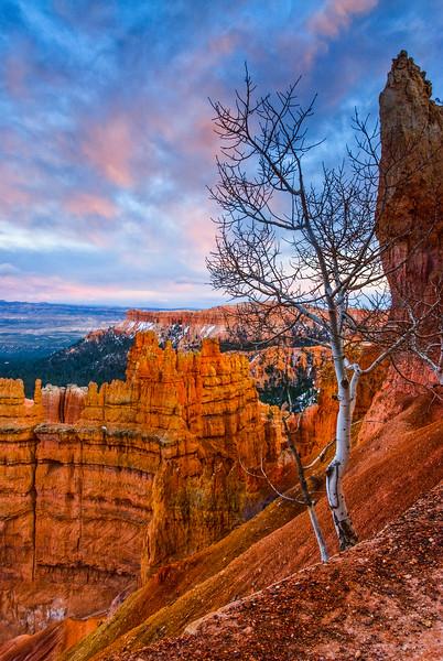 Bryce Canyon Aspen