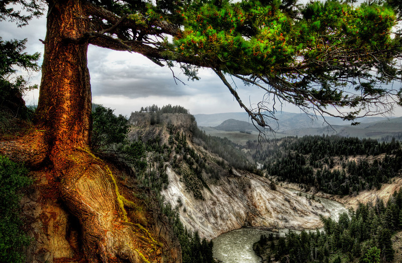 """<h2>The Verdant Bough</h2> <br/>This photo is entitled """"The Verdant Bough"""".  The photo was shot at this really cool place in Wyoming I found while running around Yellowstone with my rig.  I'm glad I didn't fall down that cliff while shooting, but I guess that goes without saying.<br/><br/>- Trey Ratcliff<br/><br/><a href=""""http://www.stuckincustoms.com/2009/02/18/10-principles-of-beautiful-photography-and-the-verdant-bough/"""" rel=""""nofollow"""">Click here to read the rest of this post at the Stuck in Customs blog.</a>"""