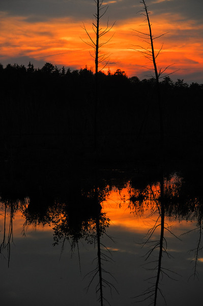 New Jersey Pine Barrens sunset