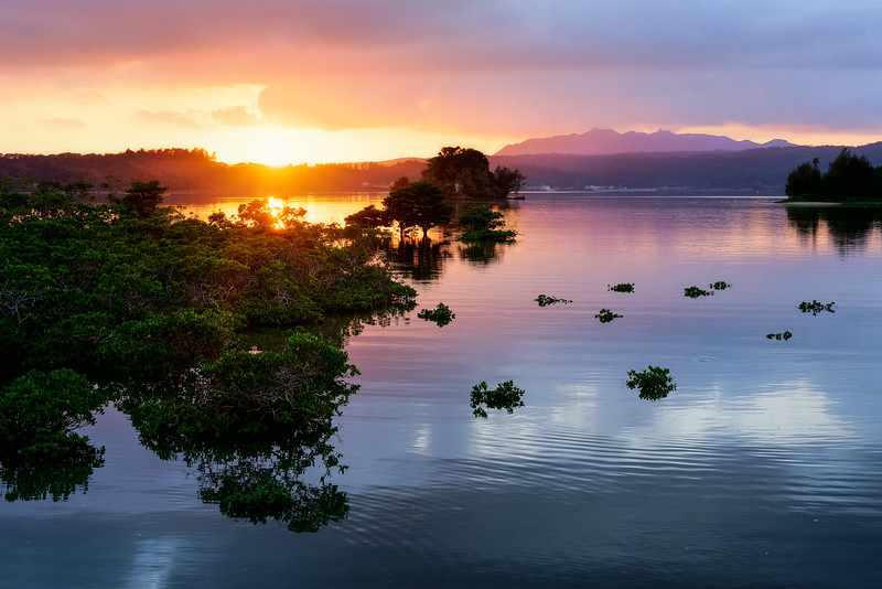Okinawa Mangroves