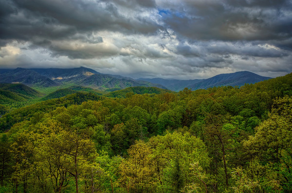 'Great Smoky Textures' ~ Great Smoky Mountains National Park, TN