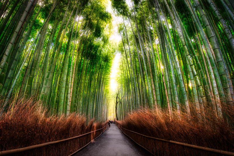 The Never-Sleeping Bamboo Forest