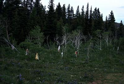 Blackfeet Reservation. 2010