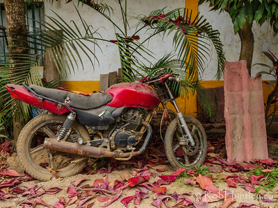 Red Motorcycle and Red Leaves