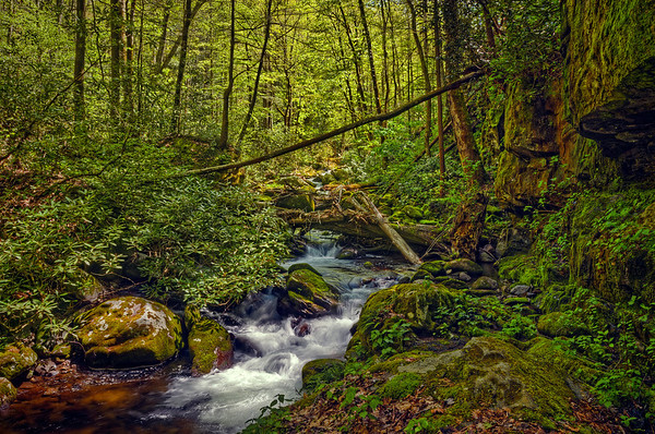 'Spring In The Smokies' ~ Great Smoky Mountains National Park, TN