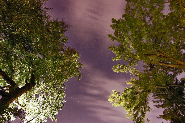Trees Clouds and Stars