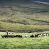The Shepherd's Herd