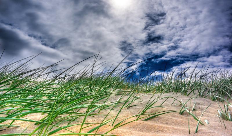 Dramatic Beach Grass
