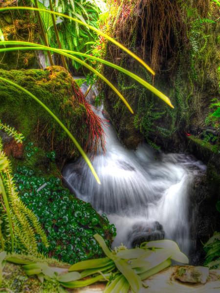 Spring in Singapor Botanic Gardens