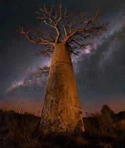 The Mammoth Baobab