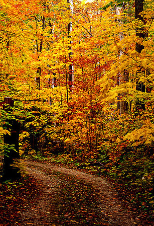 Trail into Autumn