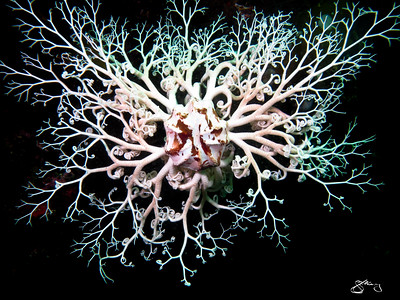 IMG_3840 - Basket Star