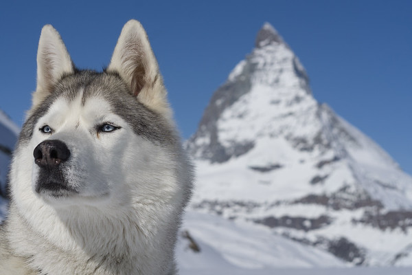 Blue eyes in Matterhorn