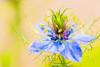 Pastel Blossom