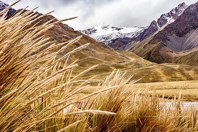 Gold Grain White Glacier