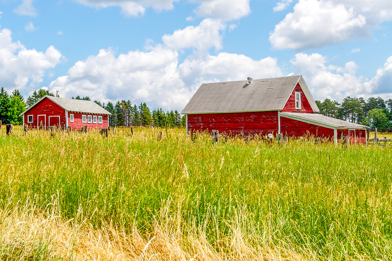 Red Outbuildings in the High Grass