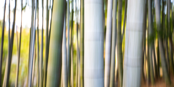 Bamboo Abstract • Kyoto