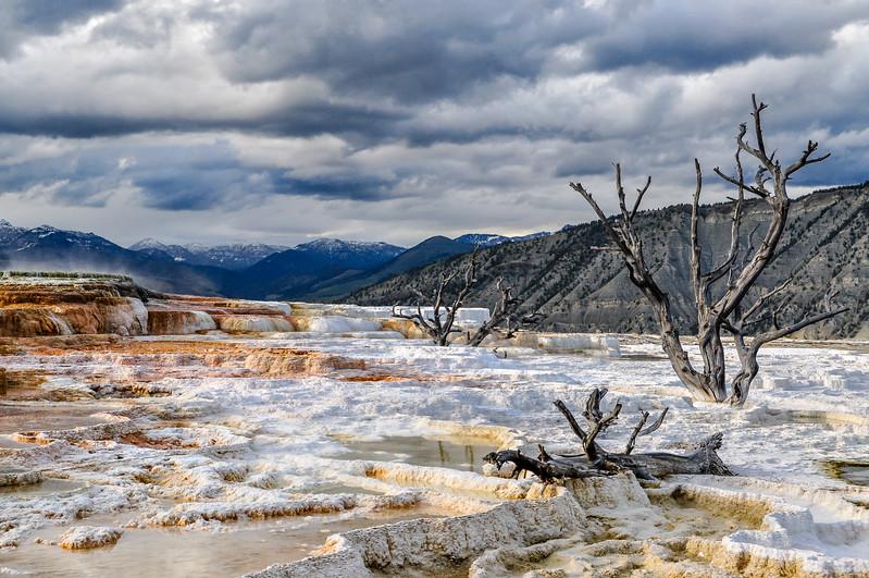 Tree Skeletons in Mammoth Hot Springs