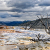 Tree Skeletons in Mammoth Hot Springs