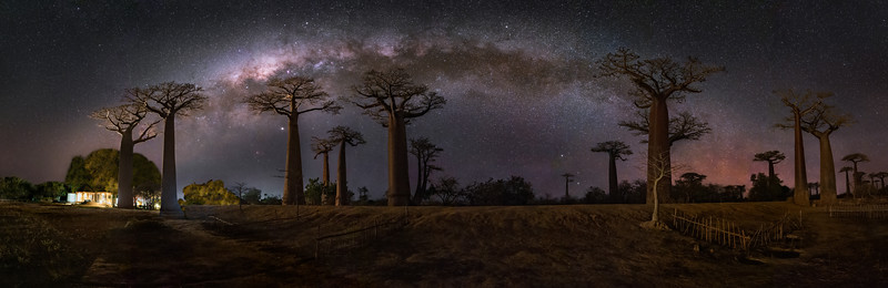 Avenue of the Baobabs Panorama