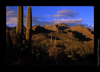 S02 Sabino Canyon Saguaro