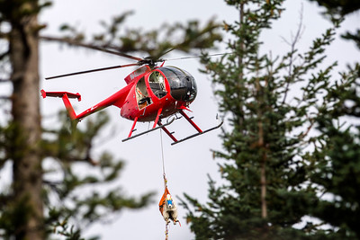 A mountain goat dangles from a helicopter in Olympic National Park on Sept. 13, 2018. 9 (esse Major/Peninsula Daily News)