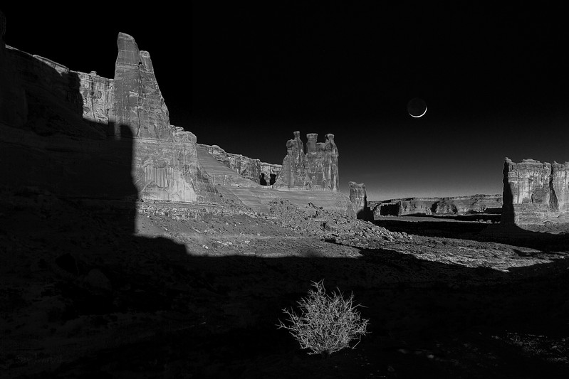 Three Gossips, Bush and Moon @Arches National Park