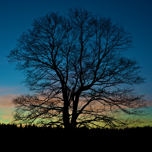 Bare Tree Sunset