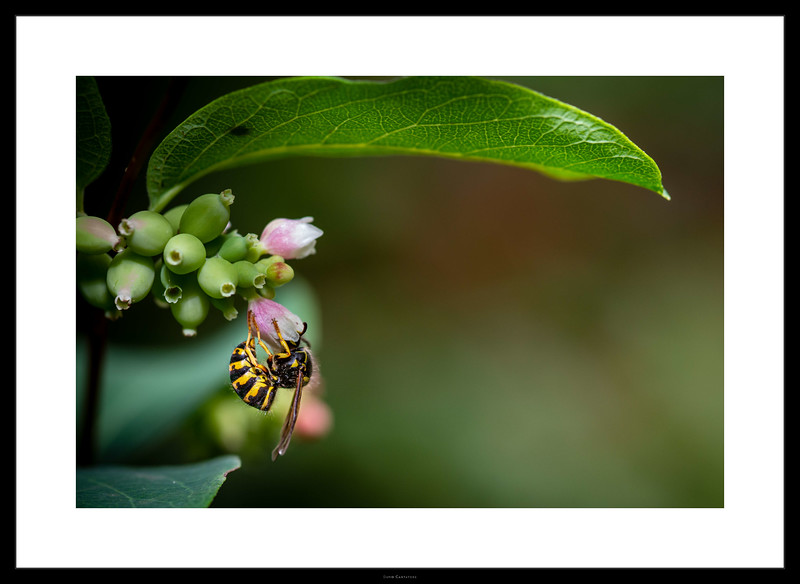 A Wasp's Lunch